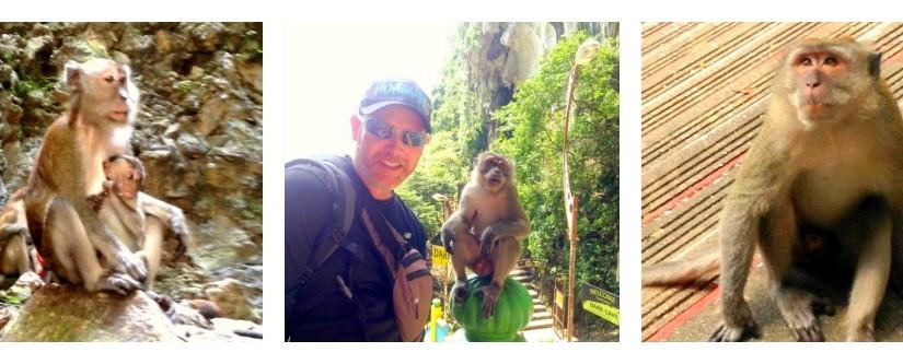 monkeys at batu caves kuala lumpur malaysia